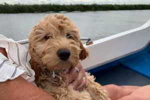Norfolk Dog Friendly Holidays - Dog on boat